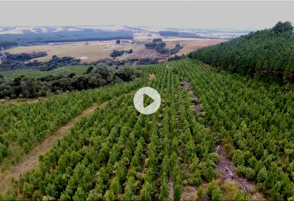Watch the Green Carbon video